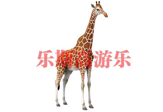 北京长颈鹿景观